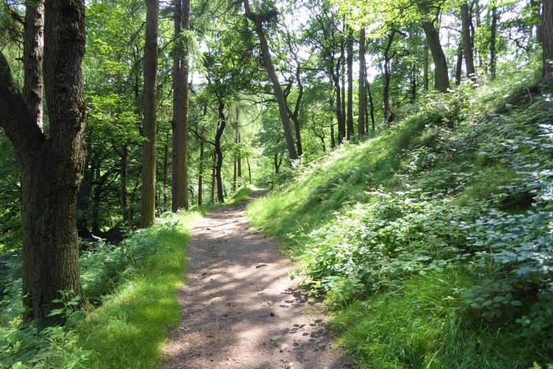 Forest Wood near Gradbach. Image courtesy of Ali Quas-Cohen.